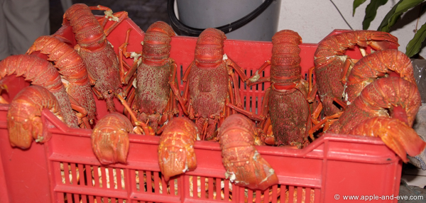 Once cooked, the crayfish is put in a basket to be briefly rinsed before being brought to the lunch table.