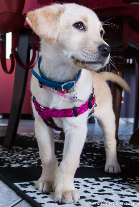 The small size and low weight works well when you get down to floor level to photograph a hyper-active puppy!