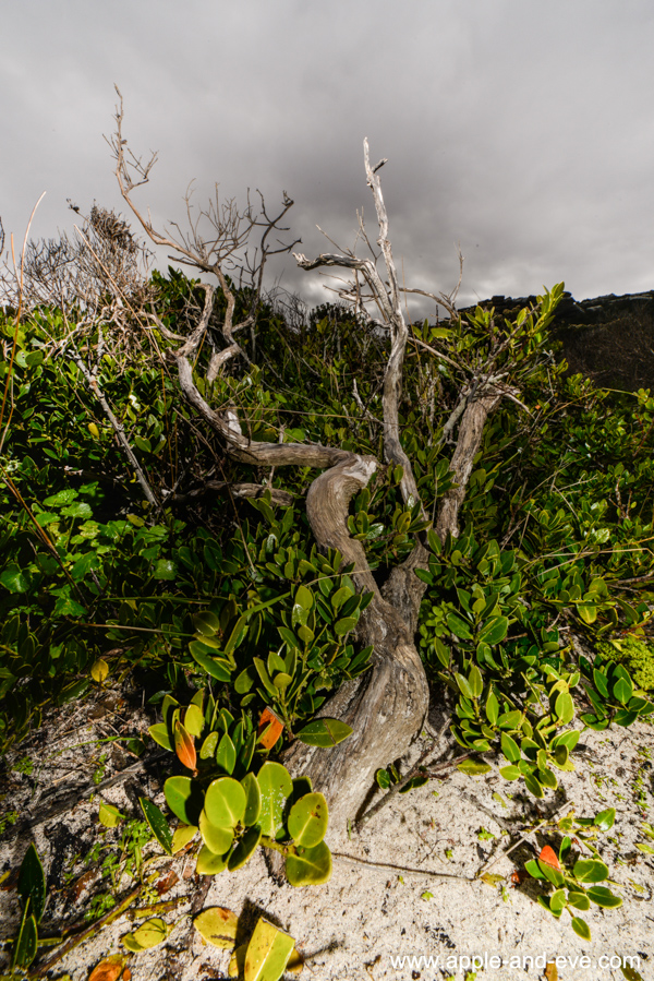 Some of the vegetation found on this coastline. Jaunine used flash to make it stand out against the grey clouds.